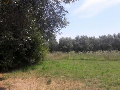 24987-vaiana-forte-dei-marmi-vendita-villa-a-schiera